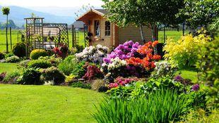 Rośliny do ogrodu – jakie gatunki wybrać?