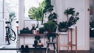 Rośliny w aranżacji wnętrz